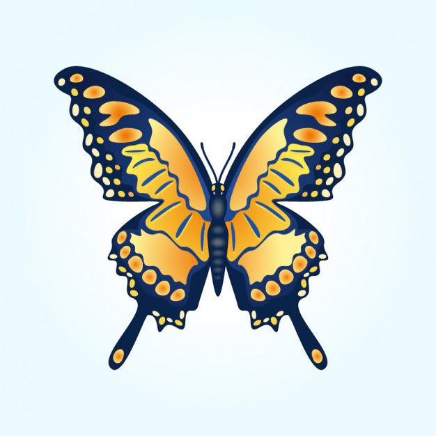 وکتور پروانه butterfly vector illustration