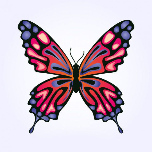 وکتور پروانه free vector butterfly design