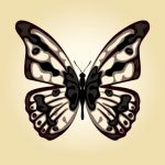 وکتور پروانه butterfly vector art template